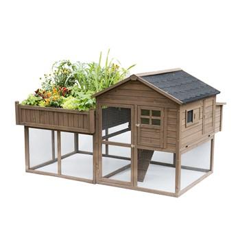 Poulailler urbain avec son petit jardin
