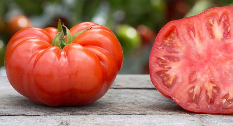 Comment avoir de belles et grosses tomates jardiner en - Comment congeler des tomates du jardin ...