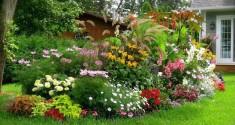 Fabriquer un engrais naturel pour plantes