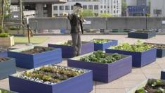Pourquoi faire pousser des aliments en ville