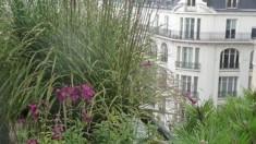 Canicule: solutions naturelles pour rafraichir